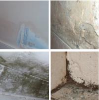 Mould Resistant Paint | Anti Fungal Paint - Coating.co.uk