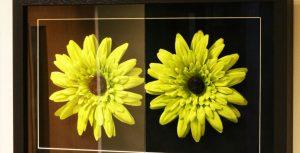 anti-reflective-glass-flower
