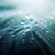 natural superhydrophobic coating on plants